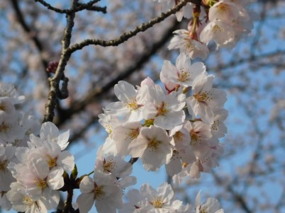 Kyoto - Chemin de la Philosophie