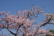 Kyoto - Ruelles très fleuries, entre le chemin de la Philosophie et le temple Heian