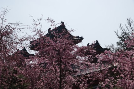 Kyoto - Jardins du temple Heian