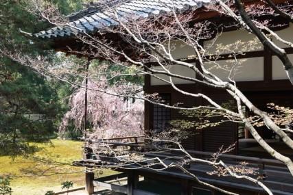 Kyoto - Temple Shoren-in