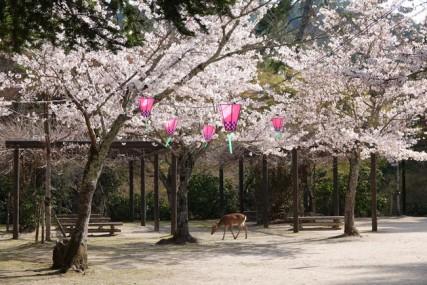 Ile de Miyajima - Momidjani Park