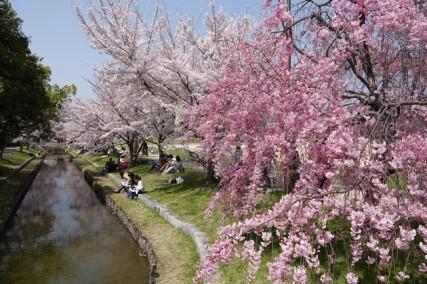 Hiroshima - Pique-nique géant pour fêter l'arrivée du printemps !Hiroshima - Pique-nique géant pour fêter l'arrivée du printemps !
