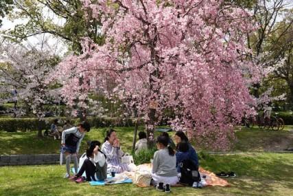 Hiroshima - Pique-nique géant pour fêter l'arrivée du printemps !