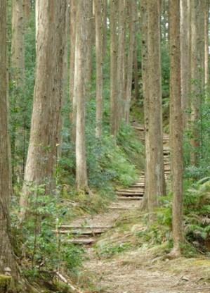 Randonnée sur le Kumano Kodo, de Hosshinmon-oji à Kumano Hongu Taisha