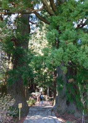 Sanctuaire de Kumano Nachi Taisha - Daimonzaka, deux cèdres âgés de 800 ans - et dont la circonférence fait environ 15m, font office de porte d'entrée du chemin