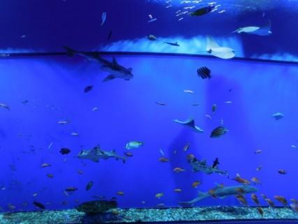 Aquarium d'Osaka - Tunnel aux raies et aux petits requins