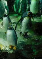Aquarium d'Osaka - Manchots