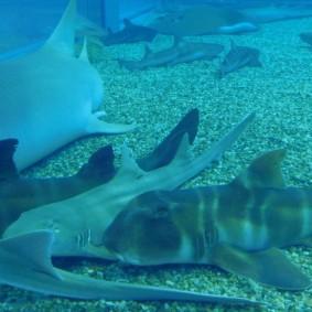 Aquarium d'Osaka, requins