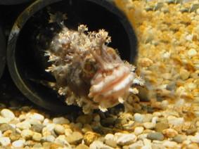 Aquarium d'Osaka