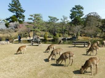 Parc de Nara