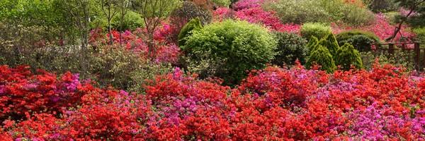 Le jardin botanique national de la baie de Suncheon, une explosion decouleurs…