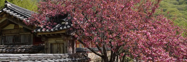 Bain de fleurs au templeSeonamsa