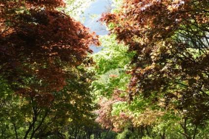 Parc provincial Maisan - Erables
