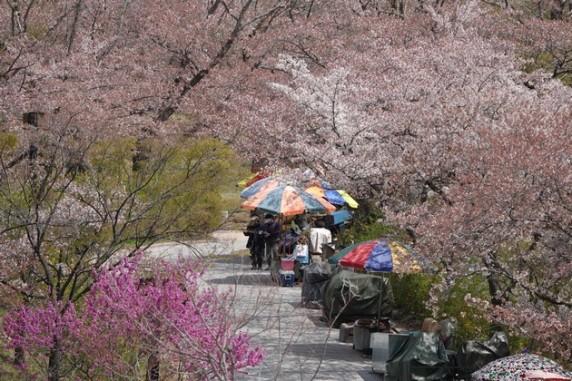 Gyeongju - Temple Bulguksa - Allée qui mène au temple