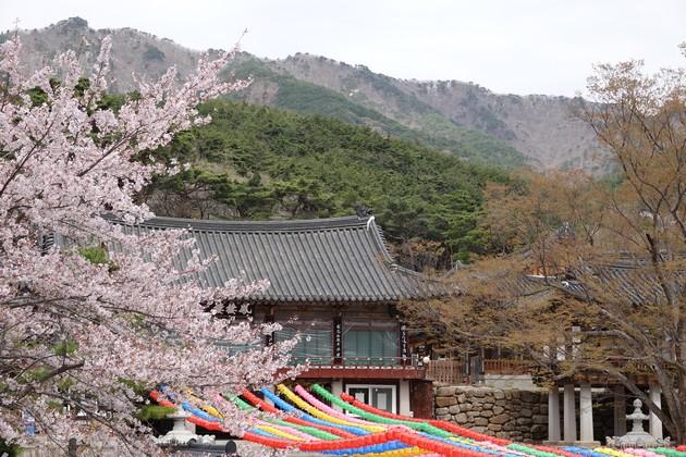 Corée-444