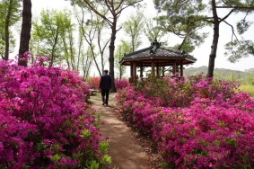 Suncheon Bay National Garden
