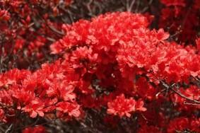 Suncheon Bay National Garden