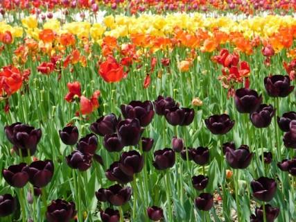 Suncheon Bay National Garden - Jardin hollandais !
