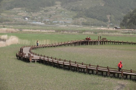 Suncheon Bay National Garden - Zone humide