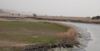 Suncheon Bay National Garden - Zone humide
