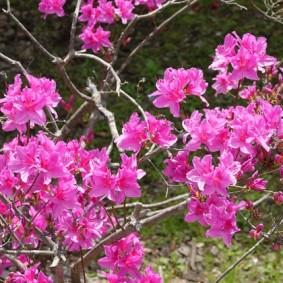 Temple Seonamsa - Hibiscus