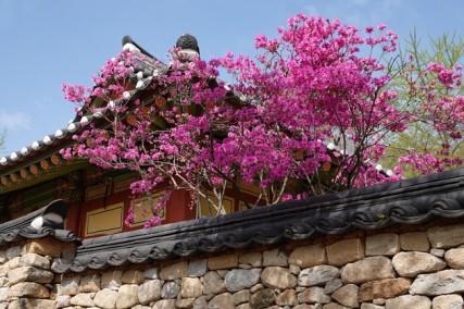 Temple Seonamsa
