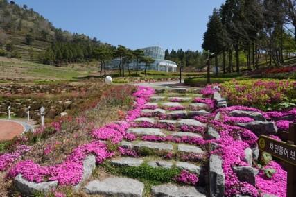 Boseong - Plantation de thé Daehan Dawon - Vers le musée