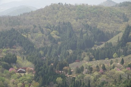 Boseong - Plantation de thé Daehan Dawon