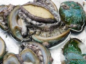 Busan - Marché aux poissons de Jagalchi