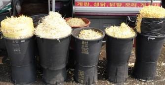 Jeonju - Nambu Market - Pousses de soja