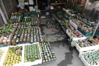 Jeonju - Nambu Market - Plantes grasses