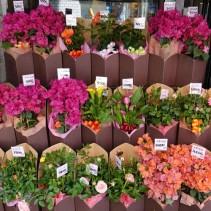 Yokohama - Belle boutique de fleuriste