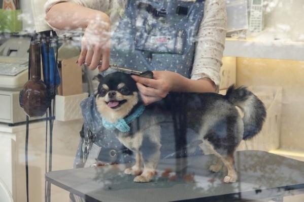 Yokohama - Salon de beauté pour chiens !