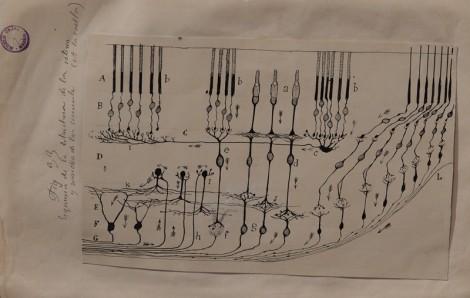 Cambridge - MIT Museum - Expo sur le cerveau - Dessin de Santiago Ramon y Cajal