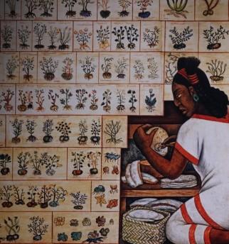 New York - National Museum of The American Indian - Codex Aztèques de plantes établi à la demande des Espagnols