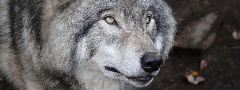 Splendide découverte de la faune nord-américaine au ParcOméga
