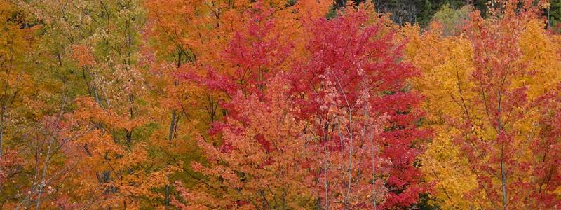 Fabuleuses couleurs d'automne, du lac Saint Jean àTadoussac