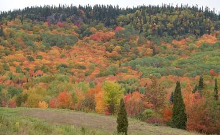 Sur la route entre Saguenay et Sainte-Rose-du-Nord