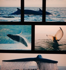 Tadoussac - Centre d'Interprétation des Mammifères marins