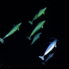 Tadoussac - Centre d'Interprétation des Mammifères marins - Photo extraite de la vidéo
