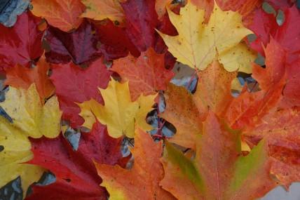 Baie Saint Paul - Composotion de feuilles sur la table de notre terrasse