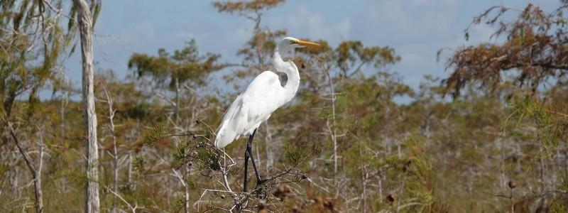 Découverte de la partie sud du Parc National desEverglades