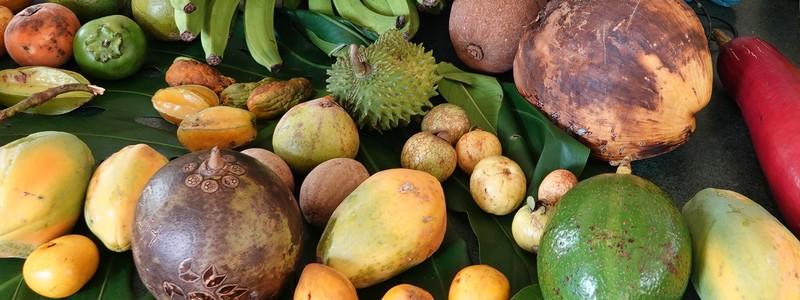Au cœur des arbres fruitiers tropicaux de la Floride et d'ailleurs, au Fruit & SpicePark