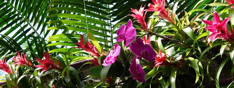 Belles visites de Sarasota et du Marie Selby BotanicalGardens