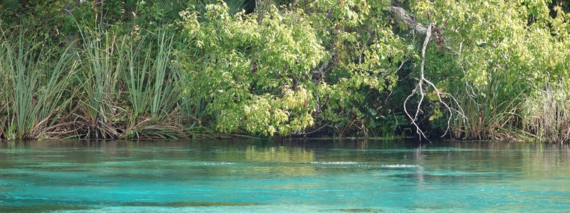 Du centre d'Orlando à Alexander Springs, une source naturelle aux eauxtranslucides