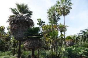 Miami - Fairchild Tropical Botanical Garden