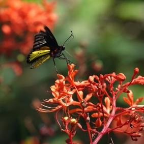 Miami - Fairchild Tropical Botanical Garden- Pavillon des Papillons