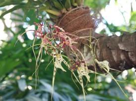 Miami - Fairchild Tropical Botanical Garden - Orchidée