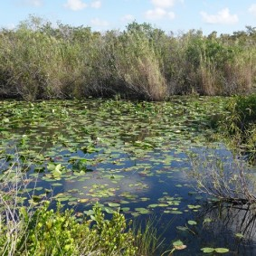 Parc National des Everglades - Anhinga Trail
