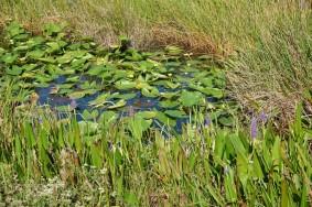 Parc National des Everglades - Anhinga Trail
